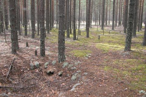 Место лагерных захоронений. Фотография 2010 года. Источник: Архив НИЦ «Мемориал»